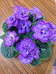 Ofereça os melhores cuidados às suas violetas africanas :) #plantas #violetas #jardim #flores