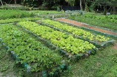 Akatu - Temas - Alimentos - Hortas comunitárias se multiplicam nas comunidades do Rio