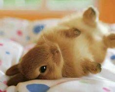 Baby bunny rolling over. Hello!