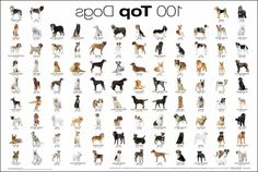 List Of Dog Types Eiss32bit In Dog Types