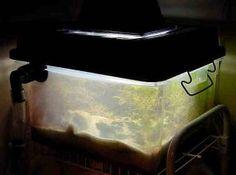 Long-Term Considerations for a Successful Reef Tank by Mark van der Wal Saltwater Tank, Wale, Litter Box, Pet Beds, Fish Tank, Dog Cat, Aquariums, Pets, Ocean