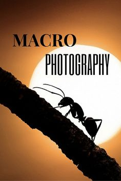 Magnificent Collection of Macro Photography