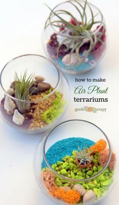 These brightly-hued vibrant terrariums come alive with living air plants (Tillandsia) colorful sand stones pebbles shells reindeer moss and miniature garden accessories. Learn how to design and care for one of these gorgeous colorful creations. Air Plant Terrarium, Garden Terrarium, Succulents Garden, Planting Flowers, Terrarium Ideas, Moss Garden, Garden Plants, Cactus Plante, Air Plant Display
