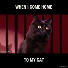 i love cats Grumpy Cat Quotes, Funny Grumpy Cat Memes, Cat Jokes, Funny Animal Jokes, Funny Animal Pictures, Cute Funny Animals, Animal Memes, Funny Cats, Grumpy Cat Good