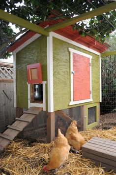 Raised on cedar posts, with an enclosed area underneath, this plywood coop has a foundation similar to a small shed. Around the coop is a fully-enclosed chicken yard made from hog wire.