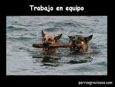 Resultado de imagen de coaching asistido con perros