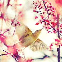 Hummingbird. <3