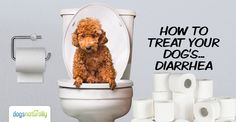 Quickly cure your dog's diarrhea naturally with these herbal and homeopathic remedies recommended by top holistic veterinarians.
