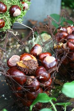 Love horse chestnuts! I have a lot of good memories connected with these.