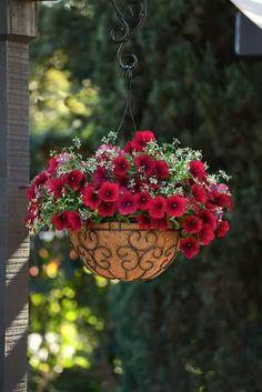 How to Keep Petunias Beautiful in a Hanging Basket ~ Garden Down South Petunia Hanging Baskets, Hanging Basket Garden, Plants For Hanging Baskets, Hanging Flower Pots, Hanging Plants Outdoor, Diy Hanging, Outdoor Decor, Container Flowers, Container Plants