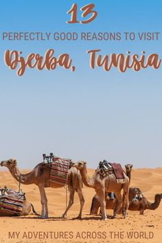 There are many reasons to visit Djerba Tunisia. markets and good food. This post highlights why you should go. Beautiful Hotels, Beautiful Beaches, Holiday Destinations, Travel Destinations, New Travel, Travel Plan, Amazing Street Art, Photos Voyages, How To Speak French