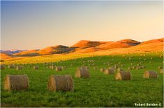 Hay bails along the foothills of the Rockies, Longview, Alberta, Canada. Photo by: Robert Berdan Farm Photography, Amazing Photography, Landscape Photography, Better Photography, Cool Landscapes, Beautiful Landscapes, Ranch, Canadian Prairies, Visit Canada