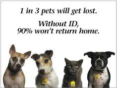 Microchips Are A Necessity - Does Your Pet Have One?