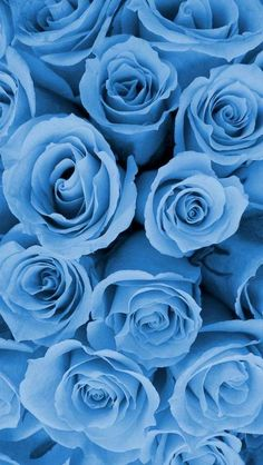 Blue wallpaper iphone - List of Latest Blue Background for Android Phone Today – Blue wallpaper iphone Blue Roses Wallpaper, Blue Wallpaper Iphone, Flower Background Wallpaper, Blue Wallpapers, Flower Backgrounds, Aesthetic Iphone Wallpaper, Wallpaper Backgrounds, Background Vintage, Colour In Wallpaper