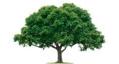 NASA Soon Able to 3D Print Trees - 3DPrint.com