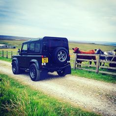 Appealing to every audience...(even the cows approve!) #Yorkshire #LandRoverDefender #AntiOrdinary #Lifestyle #TwistedDefender #Defender #LandRover #Style #4x4 #Details #Iconic #ModernClassic #Classic #Modified #Customised #UpdatedClassic #BestOfBritish #DefenderRedefined #Handmade #Handcrafted #Heritage
