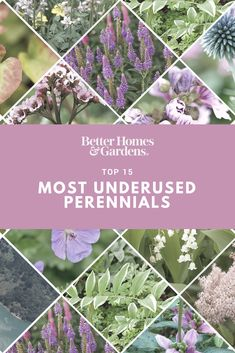 This year, give lesser-known #perennials a little extra love! #Malva, #veronica, and #baptisia are just some of our favorite underused perennial plants you need to have in your garden this year. #gardening #flowers #gardens