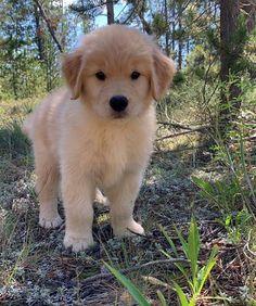 Dog And Puppies Small .Dog And Puppies Small Super Cute Puppies, Cute Little Puppies, Cute Little Animals, Cute Dogs And Puppies, Cute Funny Animals, Baby Dogs, Cute Babies, Doggies, Cute Animal Pictures
