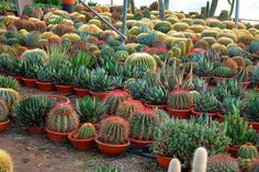 Cactus and succulents by Leo_González, via Flickr
