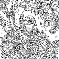 Various themed coloring pages for broadstreet publishing Bird Coloring Pages, Pattern Coloring Pages, Cat Coloring Page, Free Adult Coloring Pages, Coloring Books, Coloring Pictures For Kids, Bird Template, Craft Images, Art N Craft