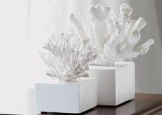White Branch Coral ,