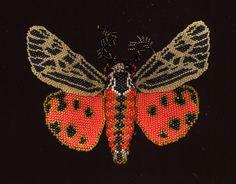 Beaded moth