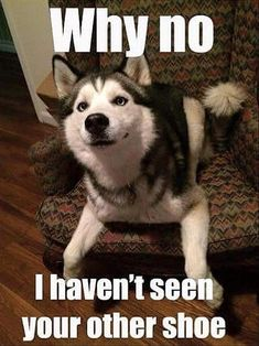 Funny Animal Pictures 25 Pics - Funny Husky Meme - Funny Husky Quote - The post Funny Animal Pictures 25 Pics appeared first on Gag Dad. Dog Quotes Funny, Funny Animal Memes, Cute Funny Animals, Funny Cute, Funny Dogs, Funny Memes, Funny Husky, Top Funny, Animal Quotes