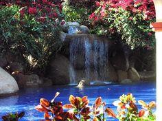 Barcelo Puerto Vallarta by the pool