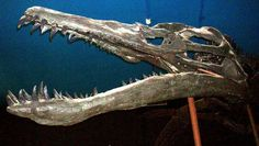 The Dinosaurs and Prehistoric Animals of France: Liopleurodon