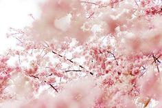 Nature. #landscape #pastel #pink #natute #sakura #japon #cerisier #tree #instafollow #L4L #outdoor #outdoors