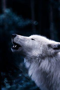Arctic Wolf.:.Same Song by WhiteSpiritWolf on deviantART