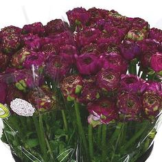 Ranunculus Pon Pon Malva 2018 Wedding Trend: Ultra Violet Purple. For lilac and purple wedding flowers to suit your colour scheme, visit our website at www.trianglenursery.co.uk/fresh-flowers!