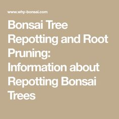 Bonsai Tree Repotting and Root Pruning: Information about Repotting Bonsai Trees