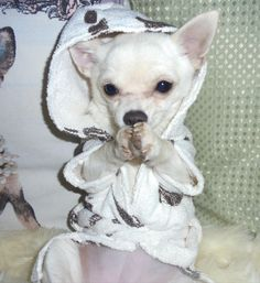 Joihttps://www.facebook.com/groups/253655318148657/n Jamie a little white chihuahua on face book