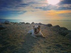 one of my fave places to relax :) by mirko_thebully