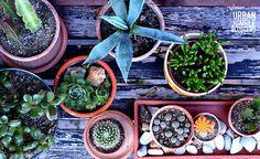 UJB   A brigád a teraszra költözött Succulents, Diy Crafts, Plants, Food, Make Your Own, Essen, Succulent Plants, Homemade, Meals