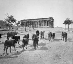 12 σπάνιες εικόνες από την Αθήνα του 1917 | LiFO