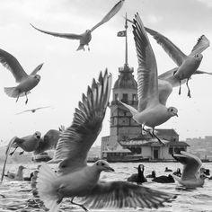 The Bird Tower by Yaşar Koç on 500px. #maidenstower #leanderstower #towerofleandros #tower #kızkulesi #üsküdar #istanbul #turkey #türkiye #bosphorus #istanbulboğazı #boğaz #boğaziçi #architecture #city #landscape #landscapes #travel #vacation #voyager #sea #travel #seagull #seagulls #martı #martılar #augsburg #munich #münchen #stuttgart