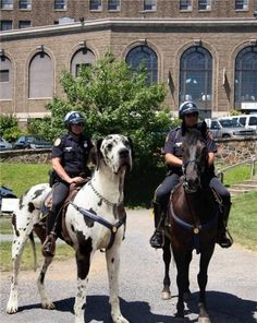 'Cause horses are too mainstream - funny pictures - funny photos - funny images - funny pics - funny quotes - funny animals @ humor