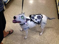 Frankenweenie pet costume #halloween i wish my dog would be patient enough for this