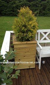Isolert blomsterkasse i tre fra Blomsterkasseriet. På terrasse/ veranda. Thuja i isolert blomsterkasse