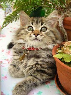 Imagens de Gatos Engraçados