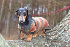 Striped  dog Sweater Clothes Hand Knitting  dachshund medium dog  red brown