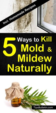 8 Signs You Need A Black Mold Detox Pinterest Articles