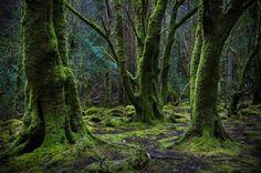 Magic Forest by janarudt on Killarney, Ireland Magic Forest, Deep Forest, Live Oak Trees, Kingdom Of Heaven, Tree Art, Ciel, Colour Images, Amazing Art, Woodland