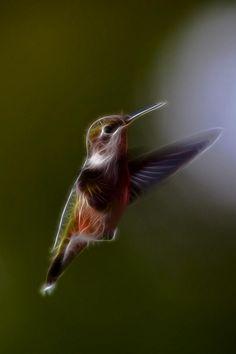 Hummingbird Fractal Las verdades elementales caben en el ala de un colibrí.