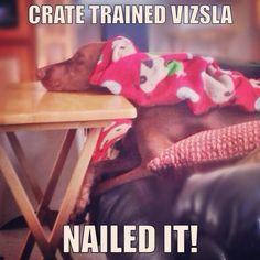 Training success...!