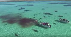 How technology could help prevent shark attacks