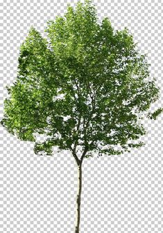 Tree Photoshop, Adobe Photoshop Elements, Photoshop Design, Tree Psd, Planer Layout, Computer Icon, Modelos 3d, Tree Silhouette, Fantastic Art