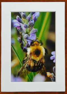 LAVENDER BEE Mini PrintBee on Lavender Farmhouse Decor